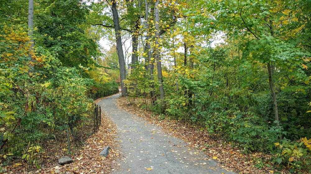 A trail winding through New York's Central Park.