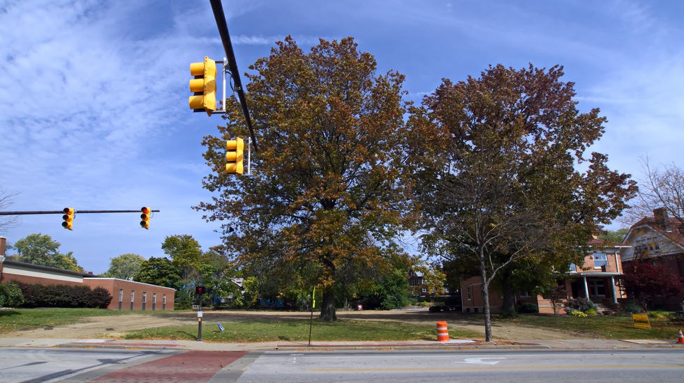 Street trees aren't just attractive, they also provide a myriad of benefits for our neighborhoods and cities.
