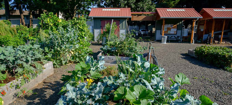 community-garden1.jpg