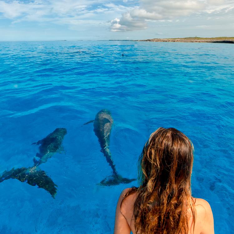 june_dolphins9.jpg