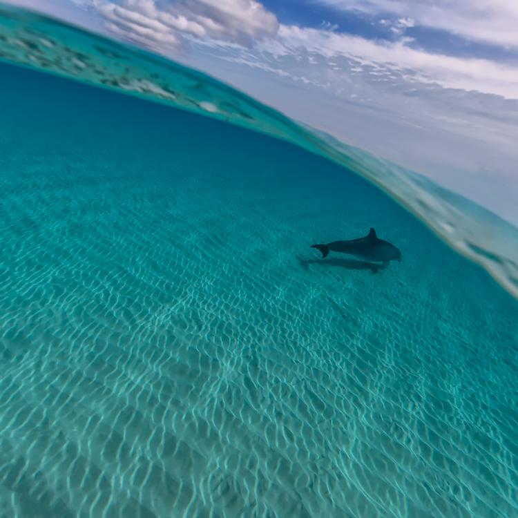 one_dolphin.jpg