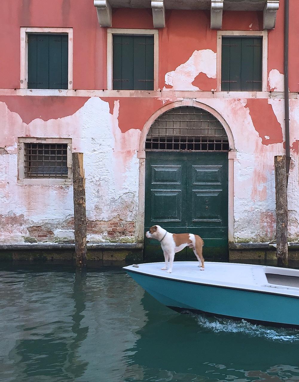 A dog on a boat.