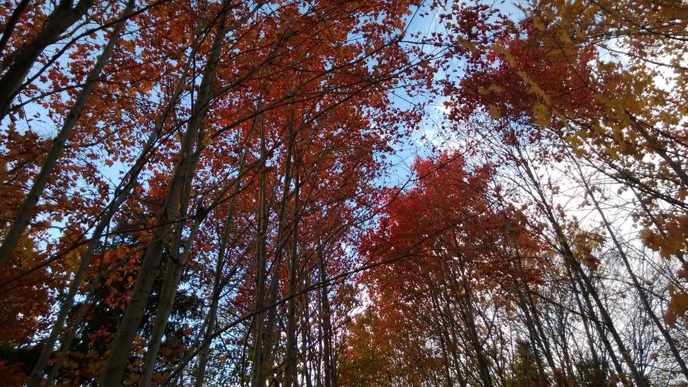Princeton, NJ November 2013