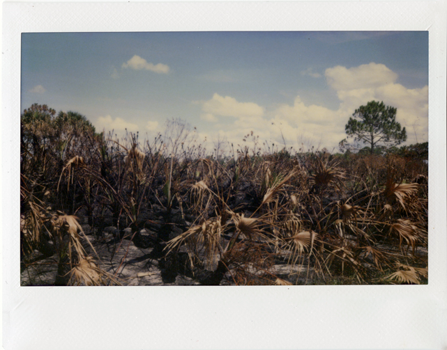 "DuPuis Management Area, Instant Film, 2.36"" x 3.9"", 2015"