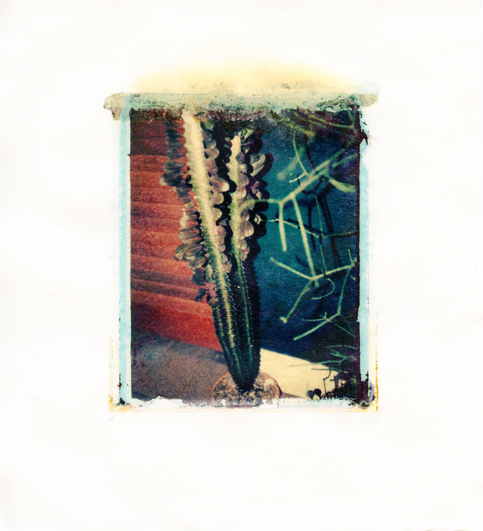 "1700 Florida Ave, Hurricane Cactus , Polaroid Transfer on hot press watercolor paper, 6"" x 6.75"", 2011"