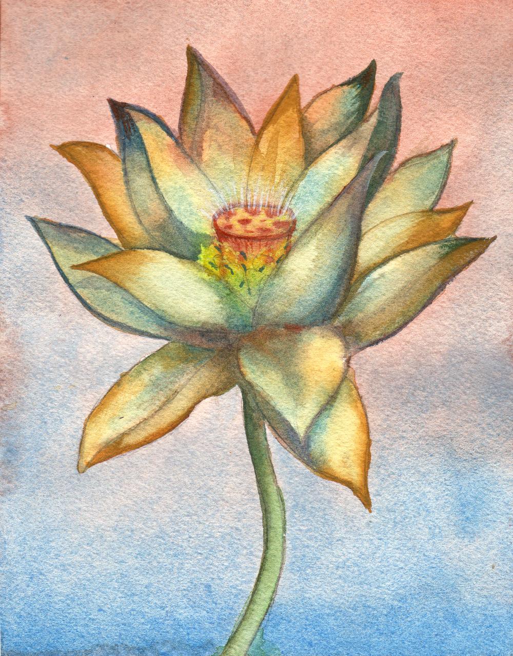 small lotus 1.jpg