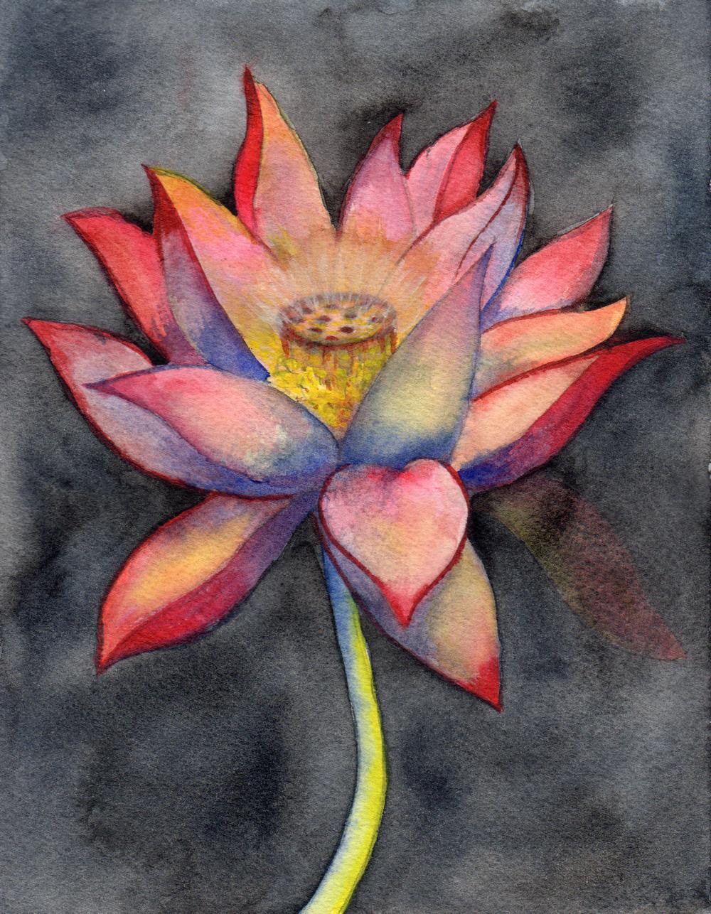 small lotus 3.jpg