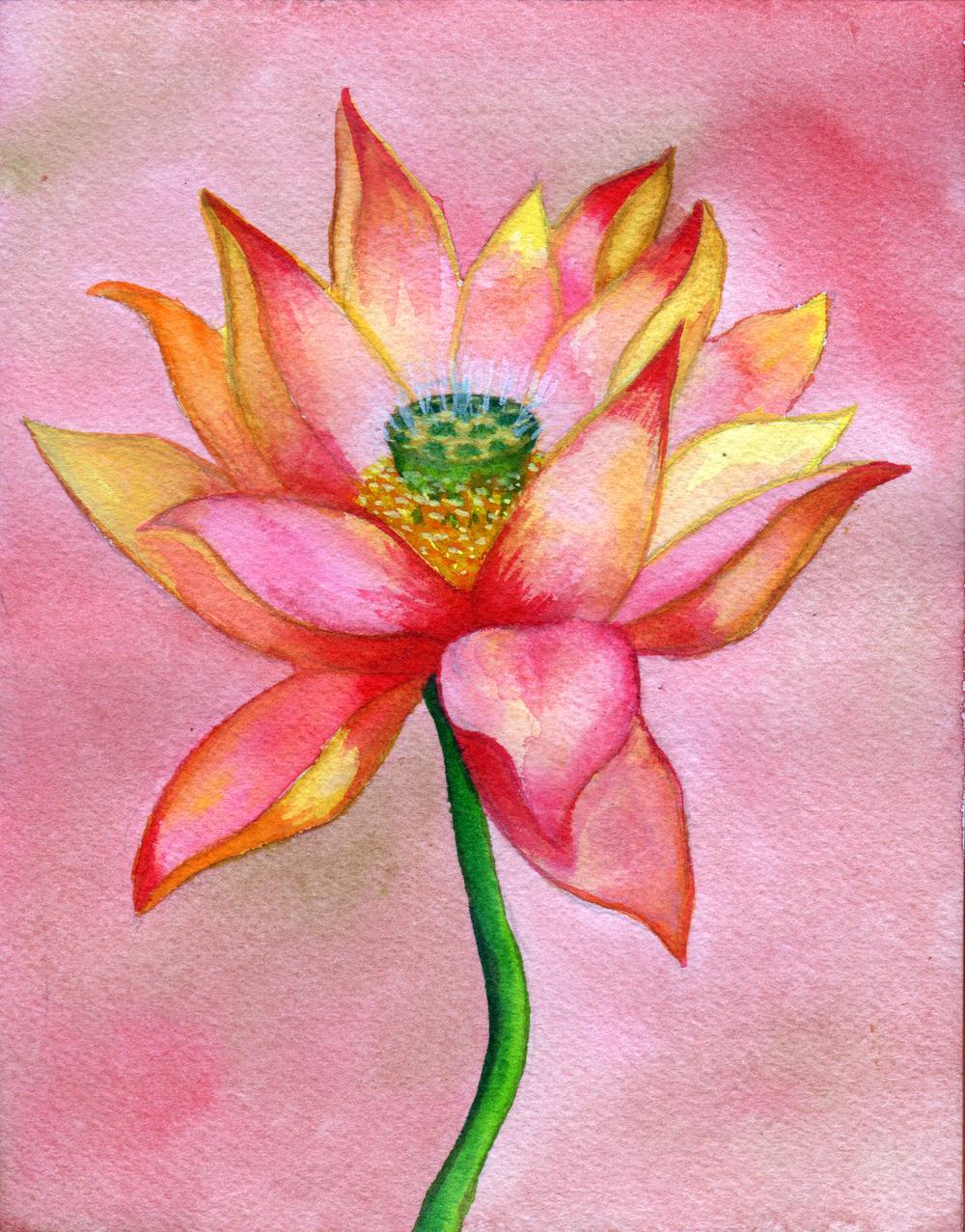 small lotus 4.jpg