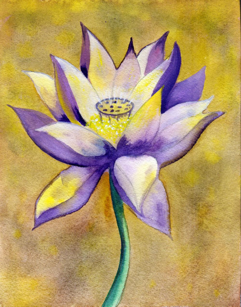 small lotus 5.jpg
