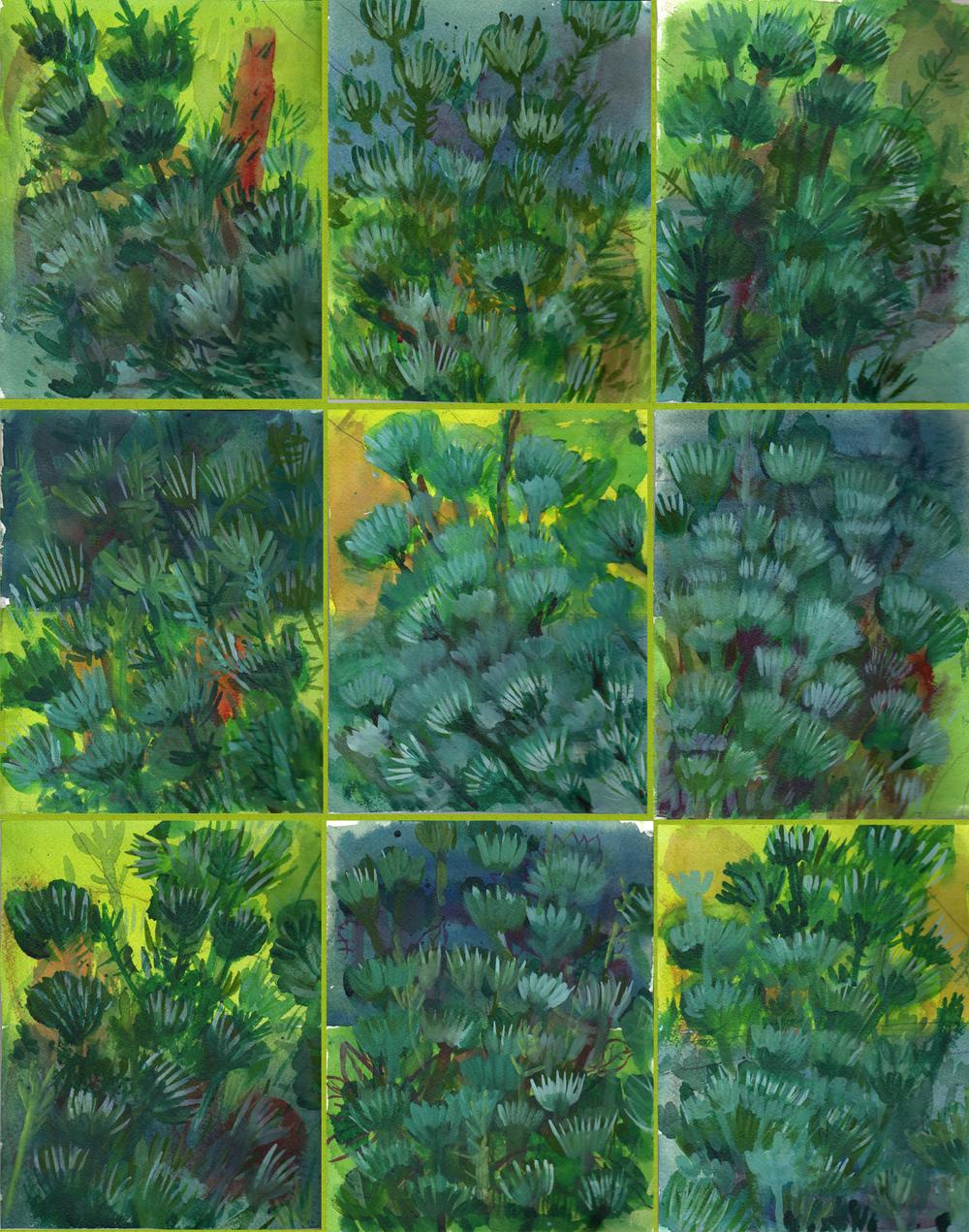 Pine Tree 001sm.jpg