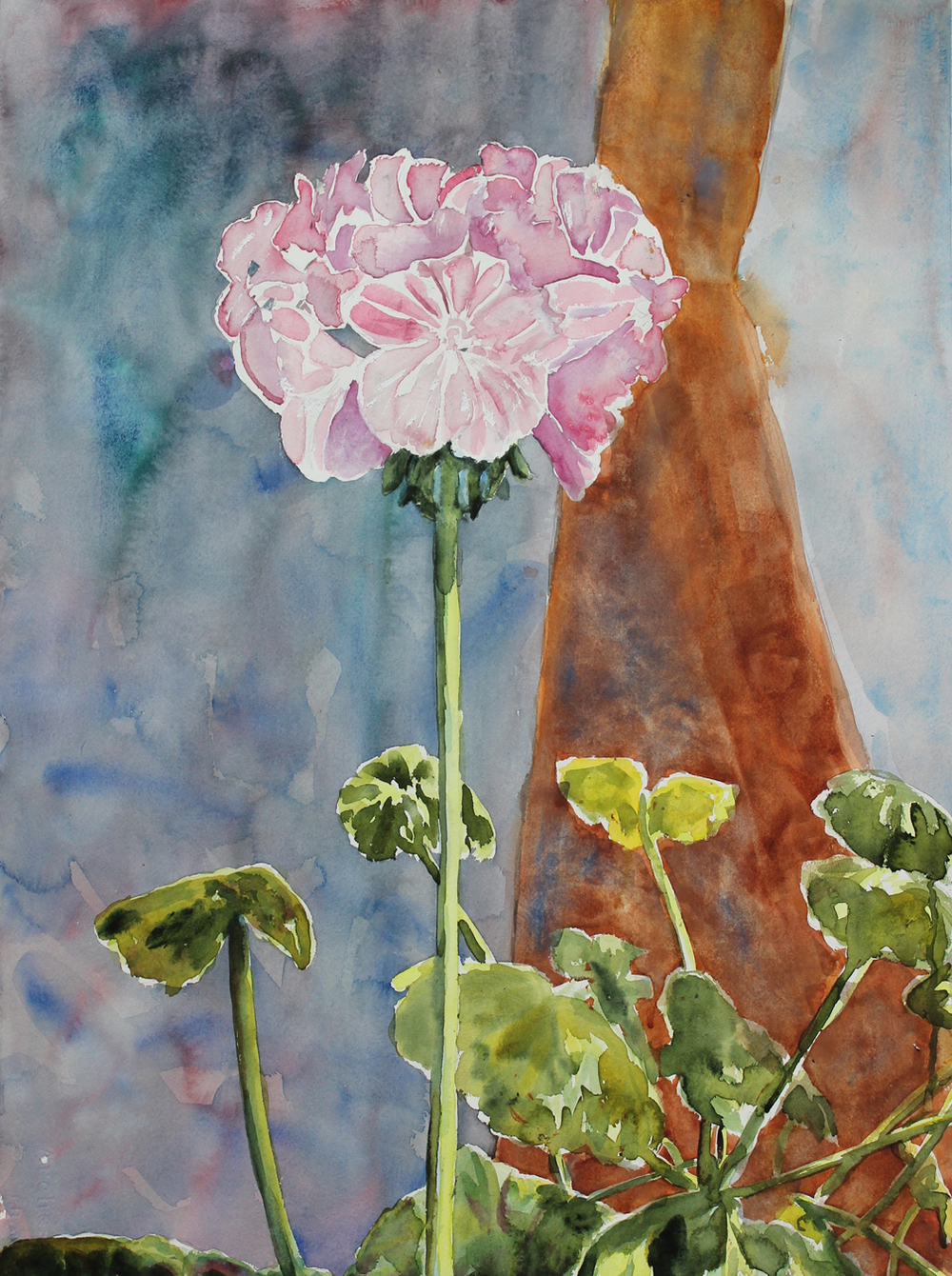 "Mom's Geranium  Watercolor on 140# Arches WC Paper 30"" x 22""  © 2015"