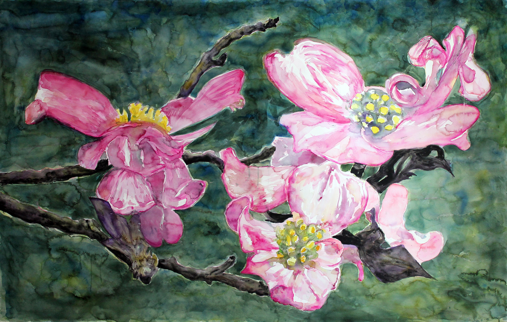 "American Dogwood, Blackberry River Trail  Watercolor on 140# Arches WC Paper 48"" x 72"" (121.92cm x 182.88cm) © 2015"