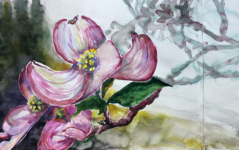 "American Dogwood, Blackberry River Trail, Number Two  Watercolor on 140# Arches WC Paper 22"" x 36"" © 2015"