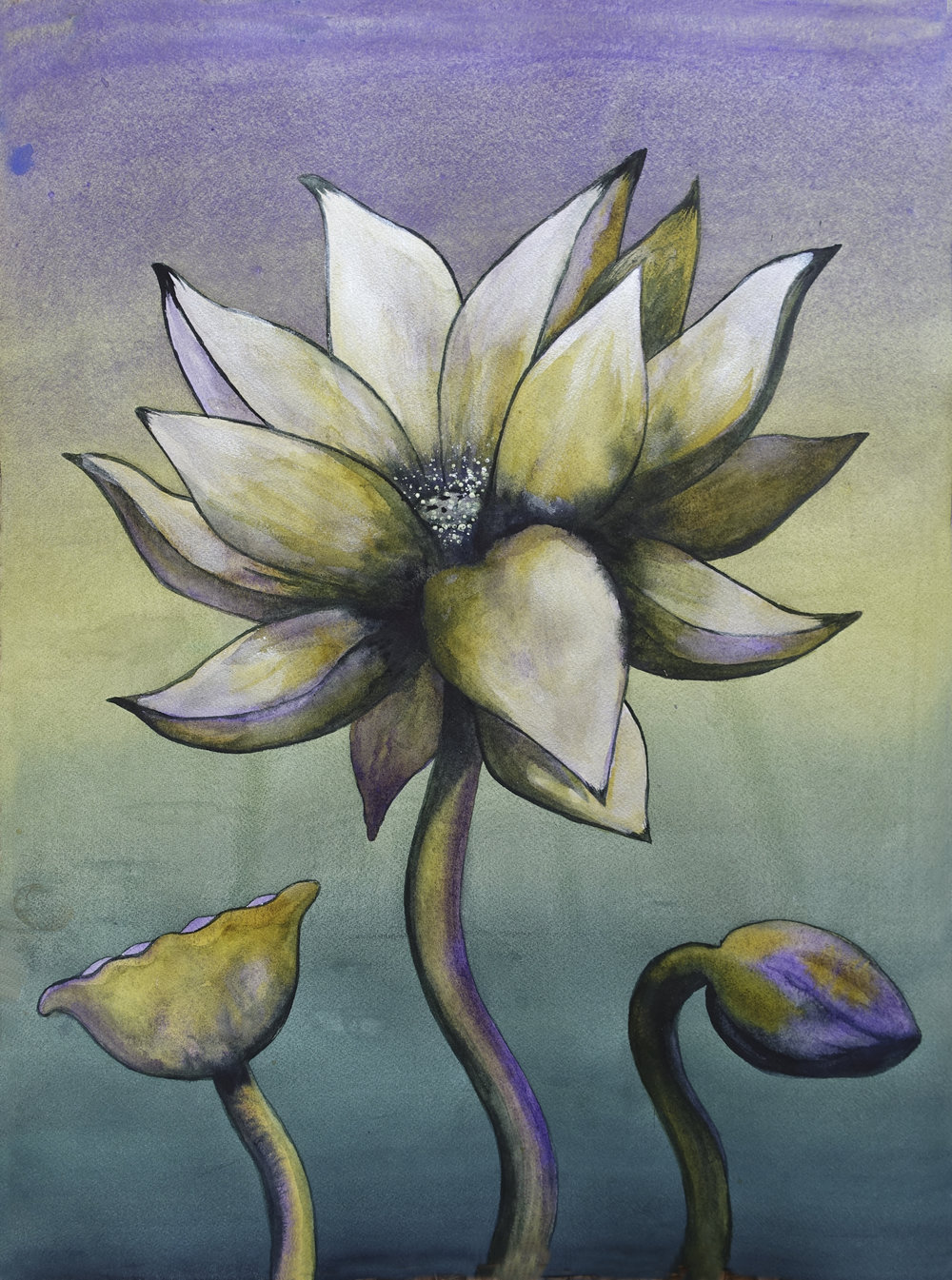 "Lotus, Number 11p, Series 2    Watercolor on Arches 140# WC Paper 24"" x 18"" (60.96cm x 45.72cm) © 2017"