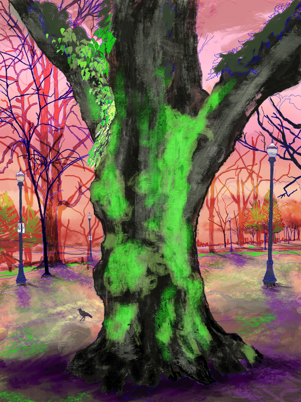 "Giant Moss Covered Tree, 2, North Park Blocks. Portland, OR   19""x13"", (48.26x33.02cm) Dimensions Variable   Electronics Painting, iPad, Procreate, © 2017"