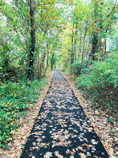 fall stroll.jpg