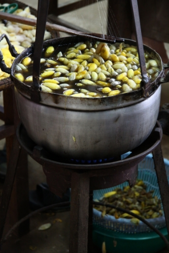 Silk worms being boiled alive