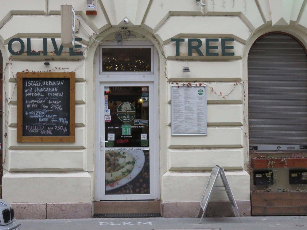 14. Olive Tree.JPG