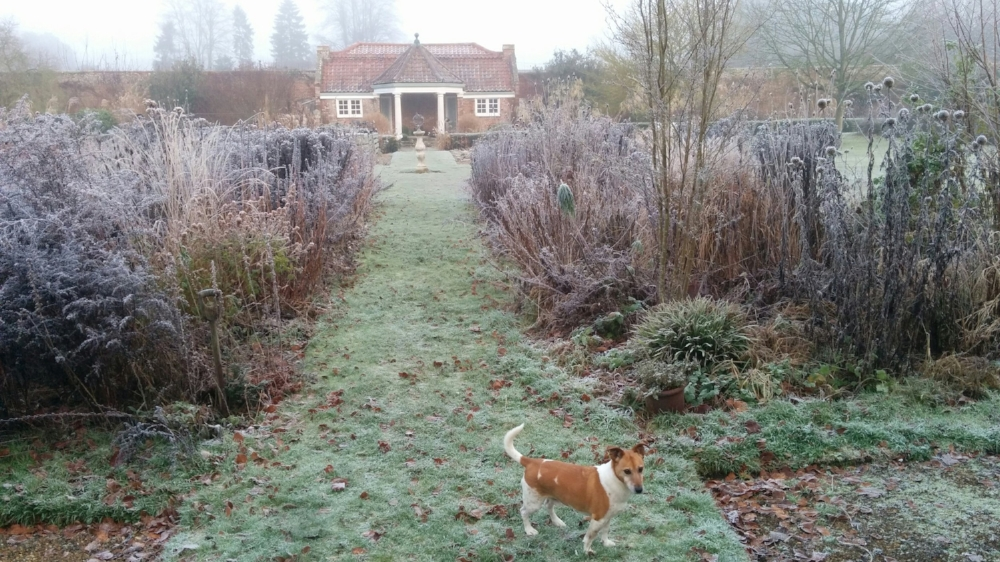Herbaceous beds in winter (with Stig)