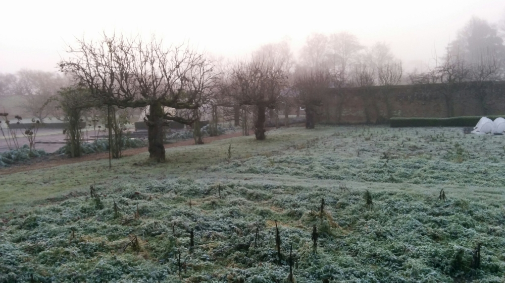 Frosty start to 2017 – a view of the kitchen garden.  Even the weeds look good with a touch of frost