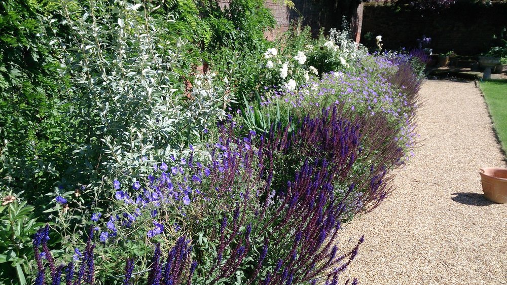 Lavenham long border 14 June 2017.JPG