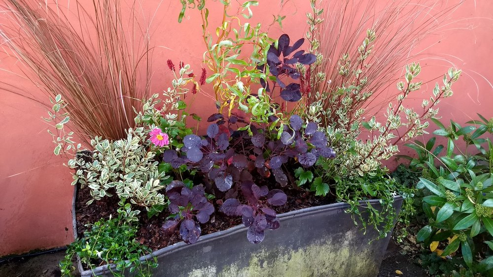Hillwatering Lead planter planted 2.jpg