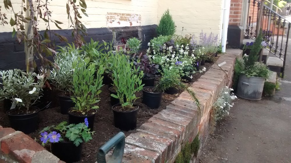 Manningtree front garden raised bed plants placed May 2015.jpg