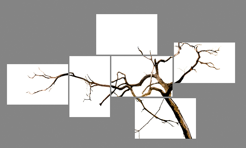 "species of spaces 2   c-prints, aluminum, wood, plexiglass, 65"" x 120"""
