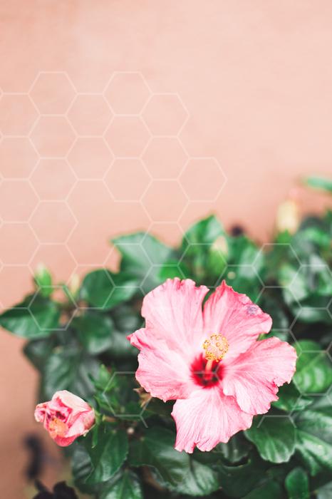 Pink_Desert_Flower-141.jpg