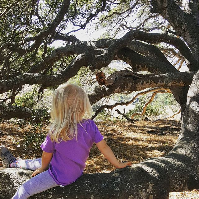 Sitting in the old oak tree.  #hike #toddler #nature #oak #tree #viewthroughtheleaves #purple #rest #climbing #🌳