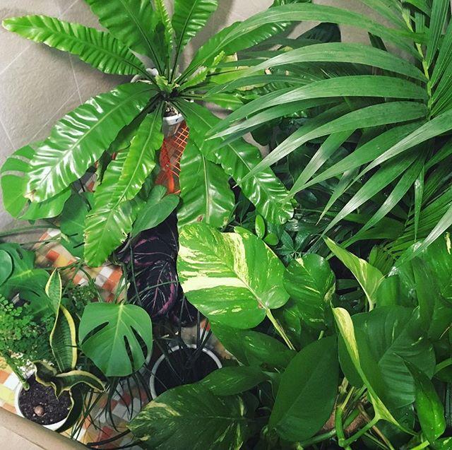 Now at full capacity for Sundays' plant bath party. #indoorplants #plantsmakepeoplehappy #urbanjungle #valenciaspain