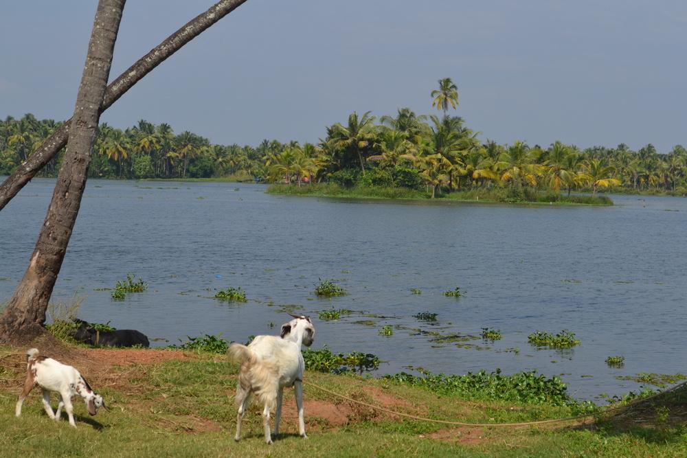 Joe & Johns - Educate & Liberate #Ourjourney  #Pocketbags. Kerala back waters.jpg
