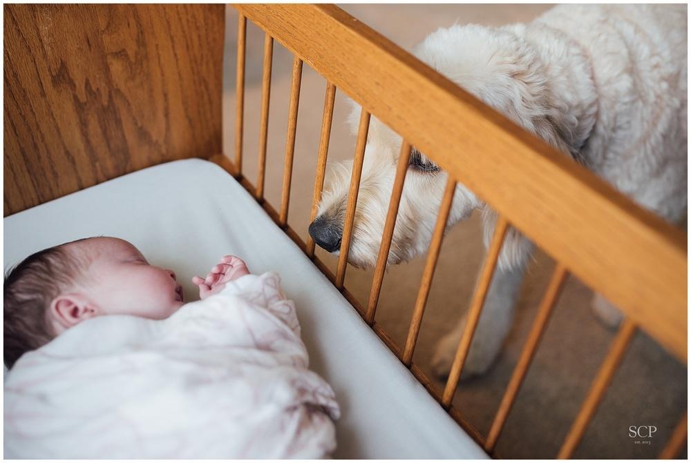 newborn lifestyle omaha bachmann-4903.jpg