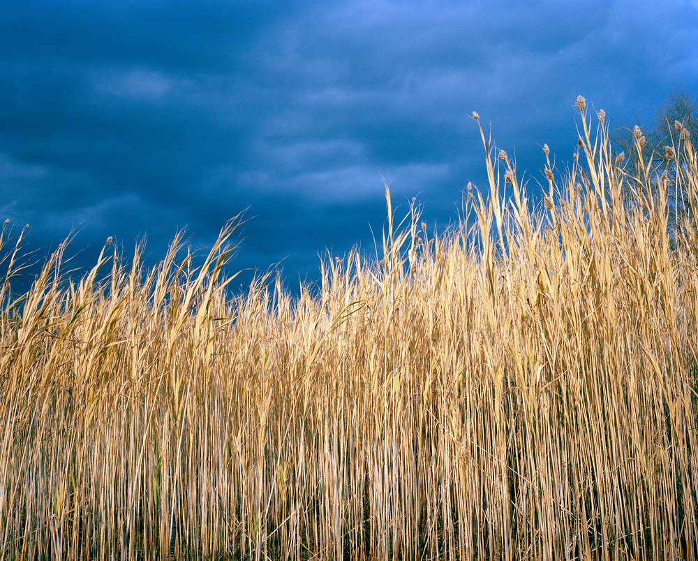 Reeds, Massachusetts (2013)