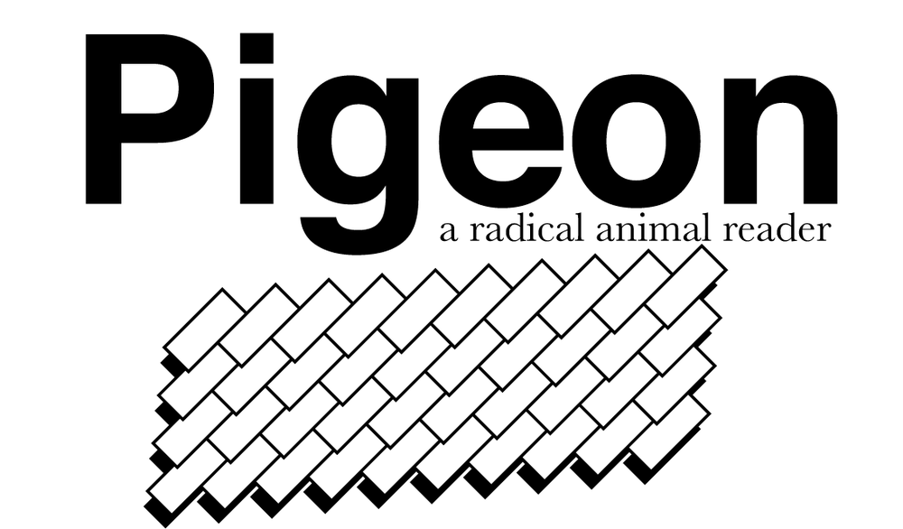 pigeon_web_banner2017.png