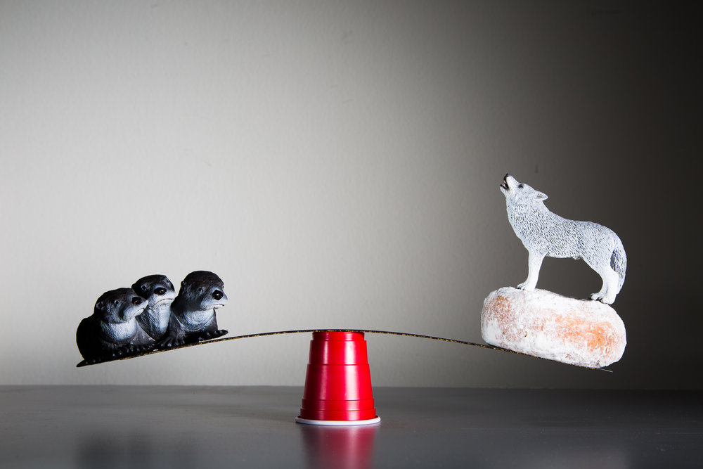 Otter Pups and Wolf Stand on Ruler Balanced on Solo Cup