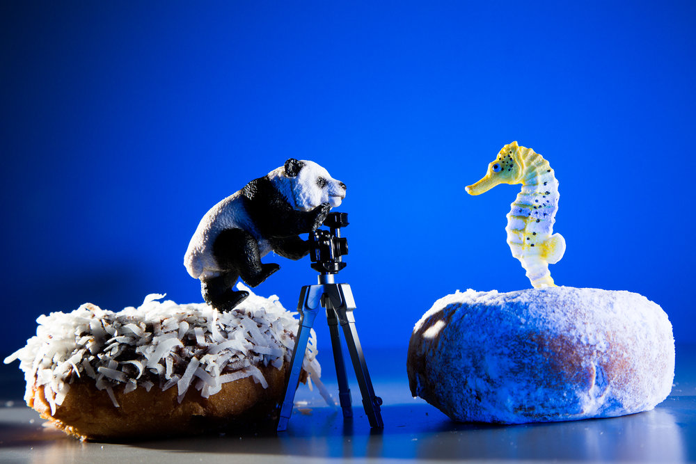 Panda and Seahorse Photo Shoot