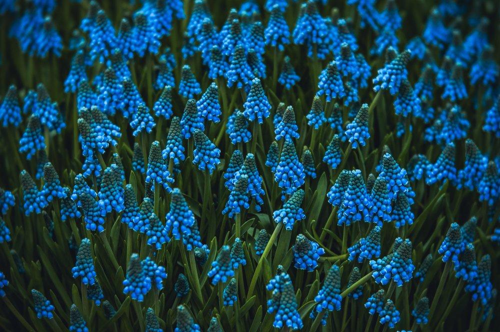 anna-zaro-798440-unsplash.jpg
