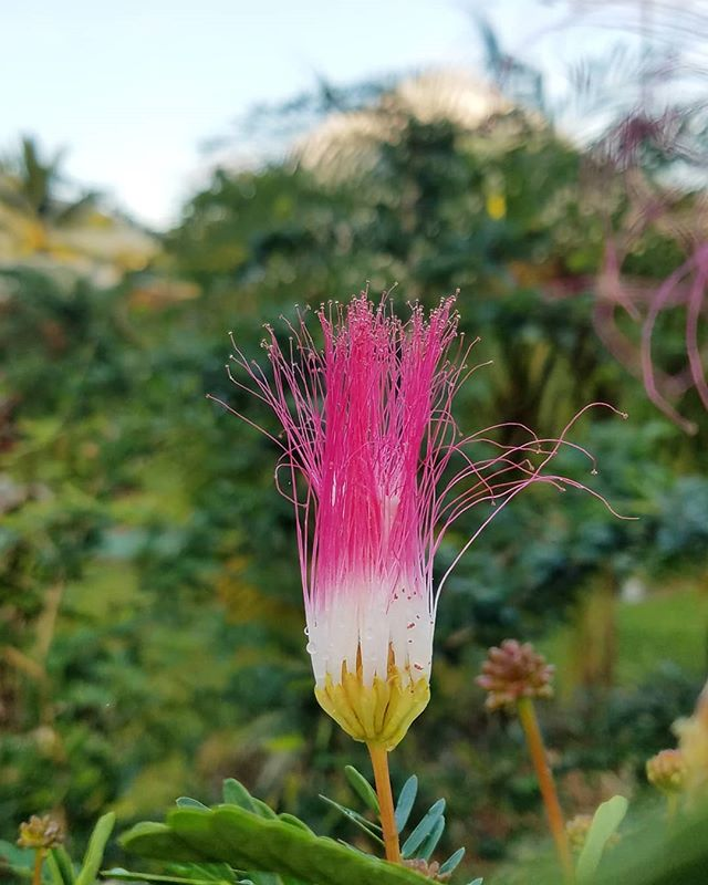 #tbt to vibrant #costarica! i loved this bloom - paintbrush something? can't remember. that's #arenal the #volcano in the background. 🌺  #puravida