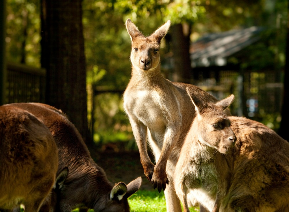 Healesville Sanctuary   Find out more