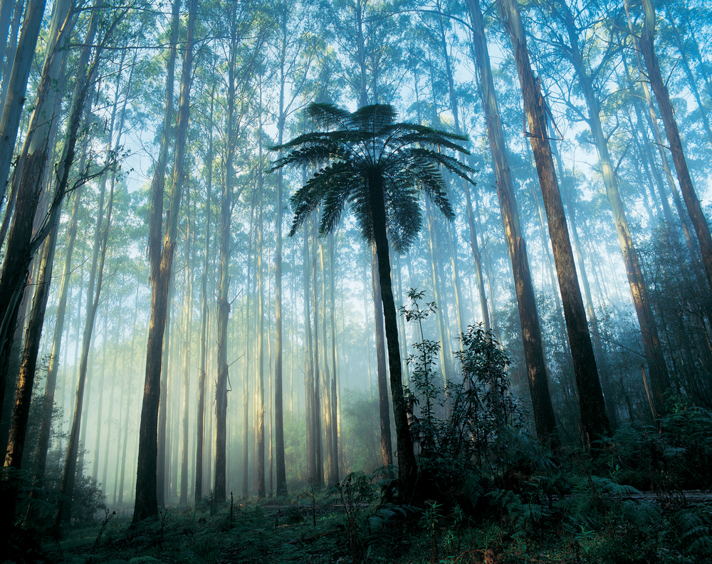 Dandenong Ranges National Park   Find out more