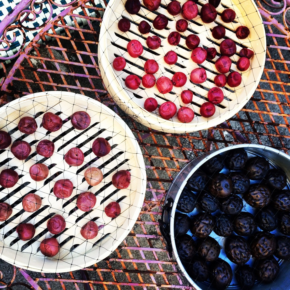 Umeboshi drying on bamboo steamer liners. Also in the photo are green walnuts in the process of pickling (but have nothing to do with the umeboshi, don't be confused!)