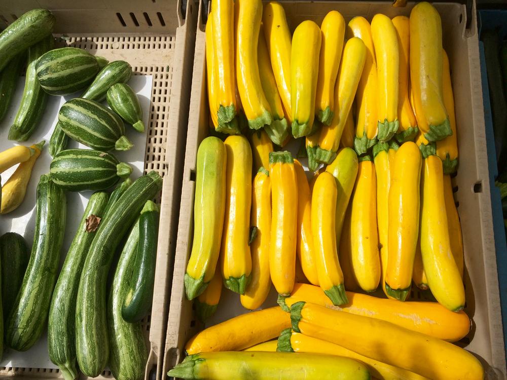 """Yellow summer squash (aka """"gold bar squash"""" shown here) gives lebna bil kusa its bright hue."""