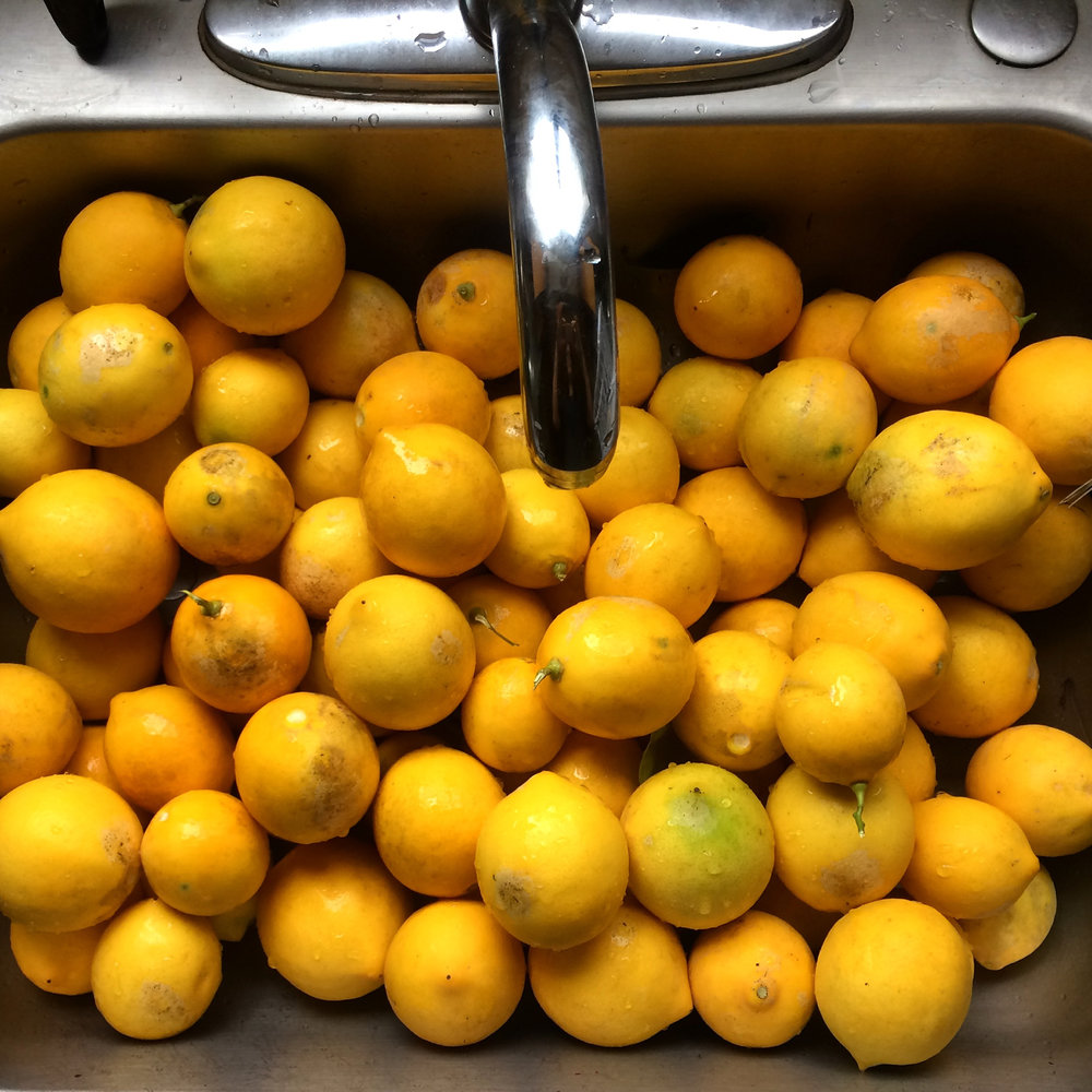 When life hands you lemons - preserve them! I really did get a laundry basket's worth of lemons.