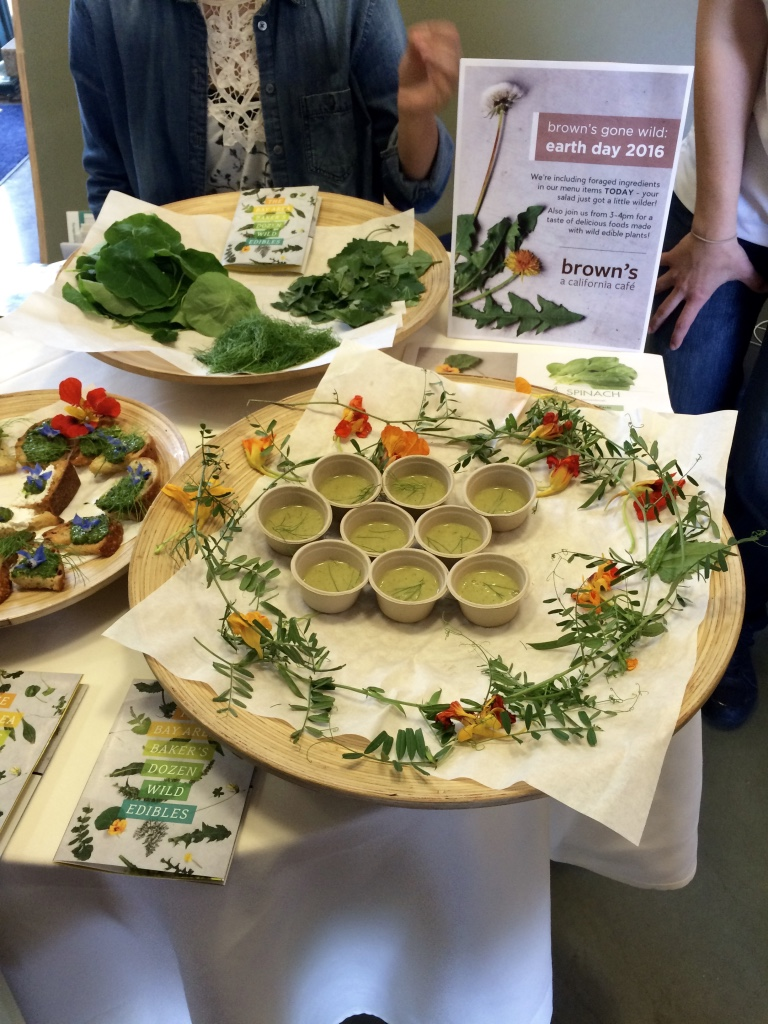 Samples from  brown's cafe  for WFFW 2016 on the UC Berkeley campus - the perfect place to educate about wild and feral foods.