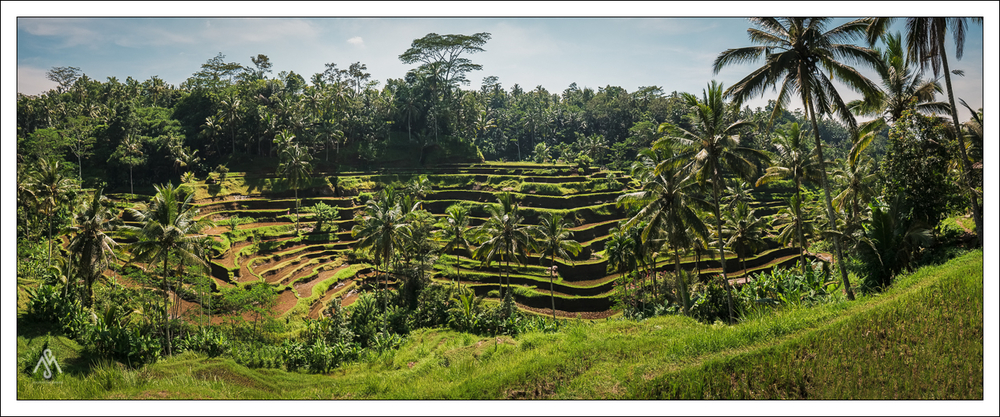 Reisfelder von Tegalalang