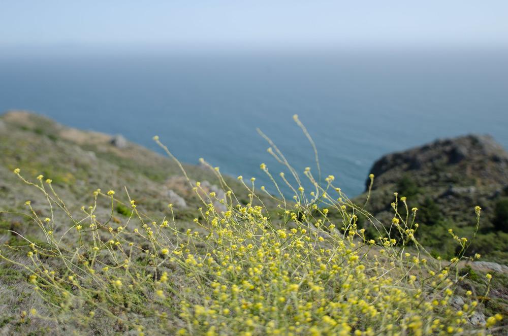 Cali_2014-60.jpg