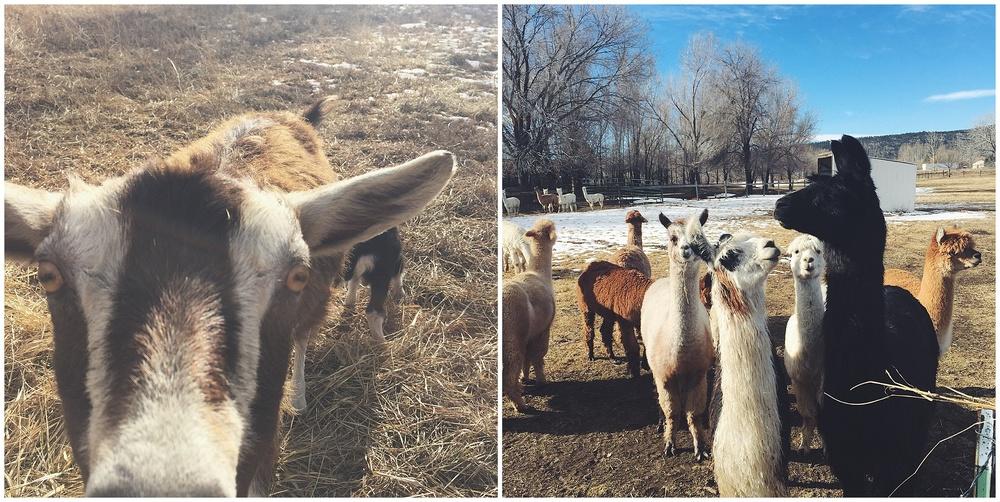Colorado Farm Photographer