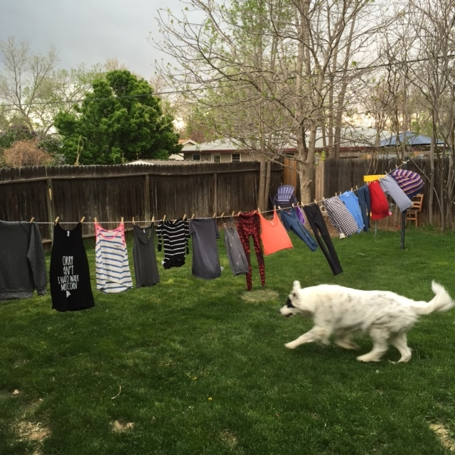 we hung our laundry out to dry on the sunny days, so twice