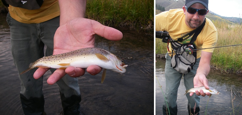 The Bonneville cutthroat trout.